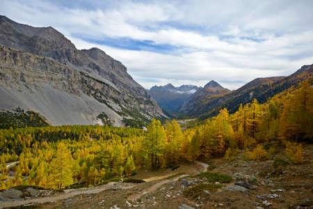 bardonecchia: Evening light on the yellow larches of the Valleé Etroite, italian-french Alps, 2000 m, near Bardonecchia