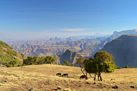 Panoramic view from the Simien Mountains National Park overlooking the Ethiopian plateau, under hard light condition  Wild horses grazing