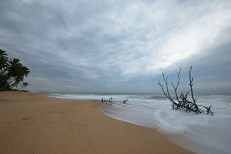 Long exposure taken on a tropical beach during monsoon time  Branches in water pointing to light  Stock Photo