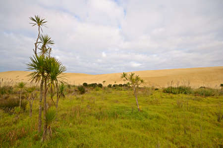 Barren sand dunes and green meadows at Te Paki, Far North, New Zealand Stock Photo - 16673387