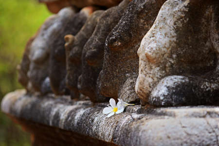 Detail  selective focus  of frangipani flower and elephant shape carved stone at Kantaka Chetiya temple in Mihintale, Sri Lanka