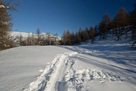 explored: Winter landscape in a bright cold sunny day explored by ski touring, back country skiing and snowshoeing  Location  italian western Alps, Piedmont, Torino Province