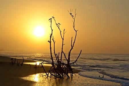 Wonderful sunrise on Tangalla beach, Sri Lanka, blurred motion effects on waves Stock Photo - 17480137