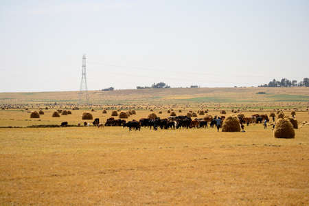 African way of farming in Ethiopia photo