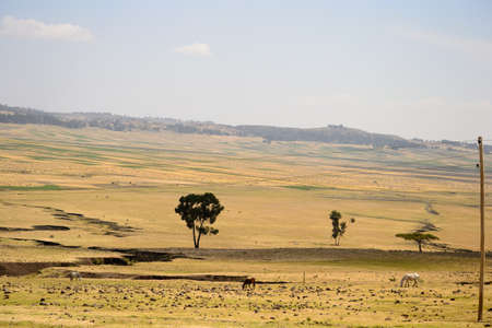 Golden ethiopian landscape Stock Photo - 17723354