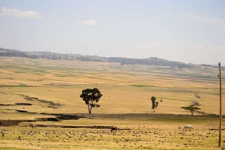 Golden ethiopian landscape Stock Photo - 17723354