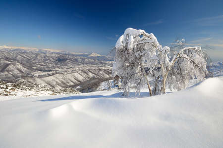 mountainscape: Elegant birch tree covered by thick snow with amazing winter mountainscape in the background and freshly fallen powder snow on the ground  Stock Photo