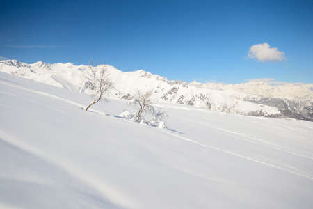 Candid snowy slope with lonely birch tree and amazing winter landscape in the background Stock Photo - 18243403
