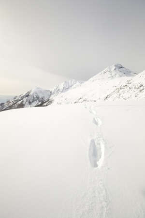 Wildlife traces on a snowy slope with scenic mountain view