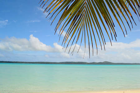 The gorgeous turquoise sea of Aitutaki lagoon, Cook Islands, viewed from the shelter of a palm tree  photo
