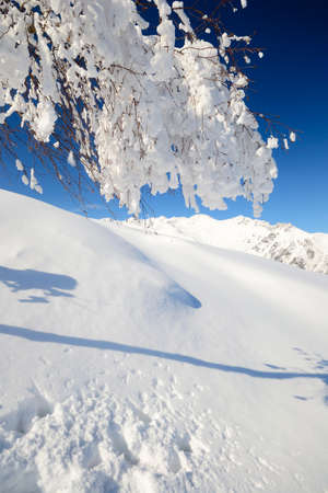 european white birch: Elegant birch tree covered by thick snow with amazing winter mountainscape in the background and freshly fallen powder snow on the ground Stock Photo