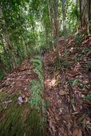 Woman hiker exploring the thick jungle of Lambir Hills National Park, Borneo, Malaysia. photo