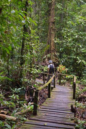 Woman hiker exploring the majestic jungle of Kubah National Park, West sarawak, Borneo, Malaysia. Selective focus. photo