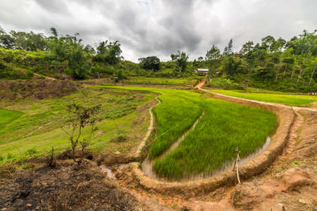 Stunning landscape and bright rice fields in Tana Toraja, South Sulawesi, Indonesia. Wide angle view. photo