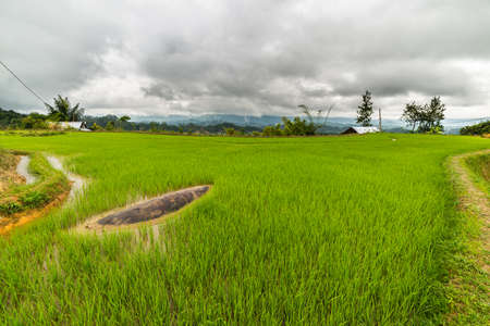 bali province: Stunning landscape and bright rice fields in the remote Mamasa region, West Tana Toraja, South Sulawesi, Indonesia. Wide angle view. Stock Photo