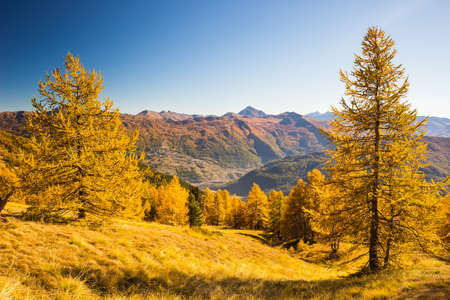Alpine valley view in a colorful autumn trees with yellow larch, high mountain peaks and ski resort in the background. Wide angle shot in the warm afternoon light. Stock Photo