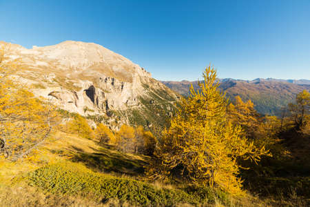 bardonecchia: Panoramic view of the Alps mountain range in a colorful autumn with yellow larch trees and high mountain peaks in the background. Wide angle shot in the warm afternoon light.