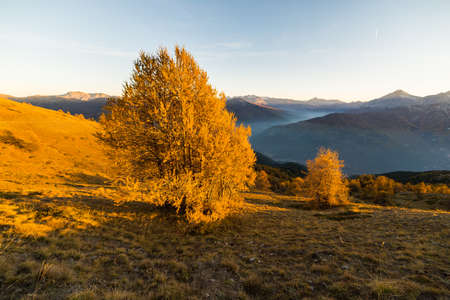 bardonecchia: Panoramic view of misty Alpine valley and mountain range in a colorful autumn with yellow larch trees and high mountain peaks in the background. Wide angle shot at sunset.