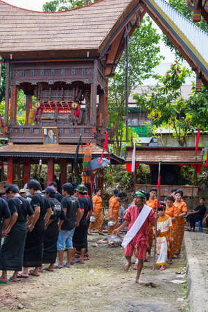 long lasting: Tana Toraja, South Sulawesi, Indonesia - September 4, 2014: traditional dressed men dancing in circle around slaughtered pigs first day of a long lasting traditional torajan funeral in Pangli village, near Rantepao, the main centre of the torajan region.