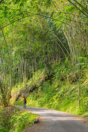 one lane: One backpacker walking through a beautiful bamboo forest in morning sunlight on single lane country road. South Sulawesi, Indonesia.