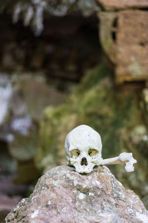toraja: Human bones and skulls in Tampangallo (Tana Toraja, South Sulawesi, Indonesia), traditional burial site with semi open coffins placed in caves or hanging from cliffs. Editorial