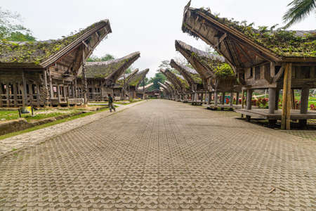 traditional culture: Tourist visiting traditional village with typical boat shaped roofs in Tana Toraja, South Sulawesi, Indonesia. Wide angle shot, panoramic view.