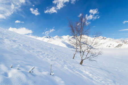 european white birch: Snowy slope with birch trees in a foggy day and majestic alpine background. Stock Photo