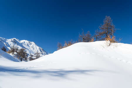 bardonecchia: Majestic peaks in a winter scenery and candid ski slope with freeride tracks in the foreground.