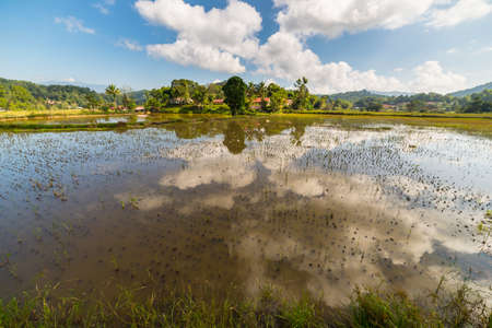 toraja: Farmlands, villages and bright rice fields in Tana Toraja, South Sulawesi, Indonesia. Wide angle view, dramatic sky.