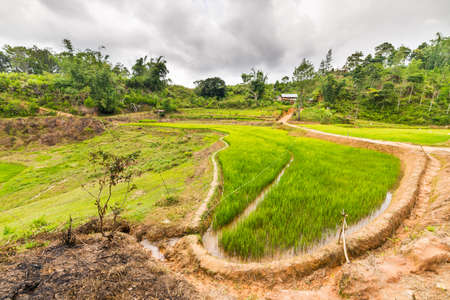 Stunning landscape and bright rice fields in Mamasa Region, West Tana Toraja, South Sulawesi, Indonesia. Wide angle view from below, beautiful geometric shape of terraced paddies. photo