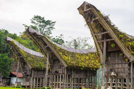 primitivism: Outstanding local architecture, boat shaped rooftop and traditional decoration with buffalo horns as symbol of wealth in a traditional village of Tana Toraja, South Sulawesi, Indonesia.