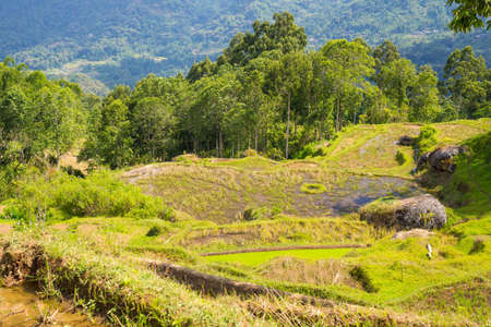 Stunning landscape of rice fields on the mountains of Batutumonga, Tana Toraja, South Sulawesi, Indonesia. Panoramic view from above with soft early morning sunlight and vivid colors. photo