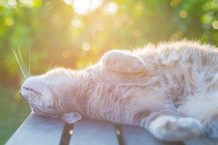 Playful domestic cat lying on wooden bench with bent paws. Shot in backlight at sunset. Very shallow depth of field, focused on snout. Reklamní fotografie