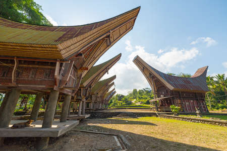 toraja: Row of traditional houses in a tipical traditional village of Tana Toraja, South Sulawesi, Indonesia. Wide angle view from below in a bright day of summer. Outstanding local architecture, boat shaped rooftop and traditional decoration. Editorial