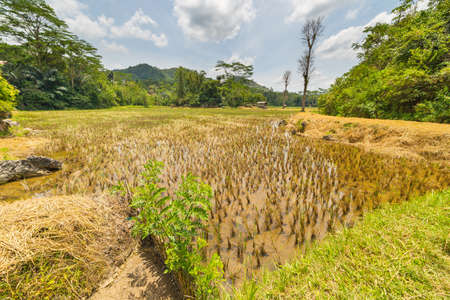 wide  wet: Stunning landscape of rice fields on the hilly region of Sangalla, Tana Toraja, South Sulawesi, Indonesia. Wide angle view in a sunny day with vivid colors.