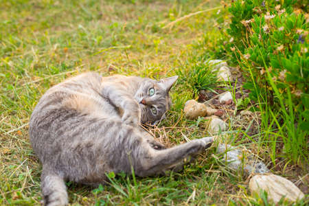 ojos verdes: Playful domestic cat lying on one side on the grass looking at the camera. Shot outdoors in home garden with very shallow depth of field, focused on the green eyes. Foto de archivo