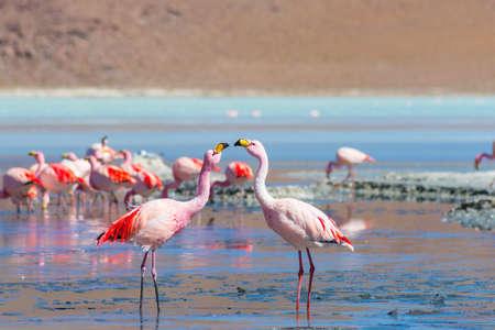 """animales del desierto: Dos flamencos rosados ??que se hacen frente a """"Laguna Colorada"""" (multicolor Lago Salado), entre el destino tur�stico m�s importante de Bolivia."""