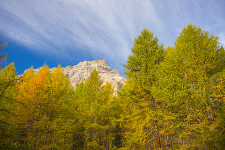 larch tree: Wide angle of high mountain peak with colorful larch tree wood in the foreground and snowcapped mountain peaks in the background. Autumn in the Italian French Alps. Stock Photo