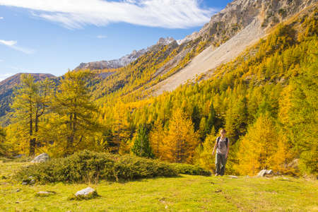 bardonecchia: Hiker walking on a colorful valley with great panoramic view and autumnal vivid colors. Wide angle shot in the Italian French Alps.