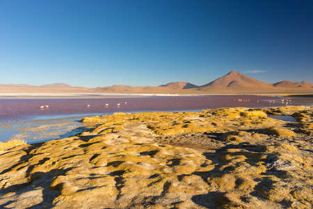 sal: Wide angle view of Laguna Colorada, Multicolored Salt Lake with flamingos, on the way to the famous Uyuni Salt Flat, among the most important travel destination in Bolivia. Wide angle view with clear blue sky.