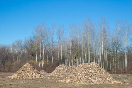 discard: Piles of wooden fresh mulch outdoors on field, discard of timber industry. Clear blue sky, natural setting. Concept of recycling on field. Stock Photo