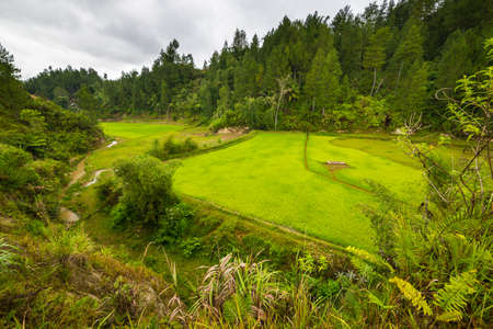expansive: Expansive landscape and bright rice fields in Mamasa Region, West Tana Toraja, South Sulawesi, Indonesia. Wide angle view of the stunning geometric shape of terraced paddies.