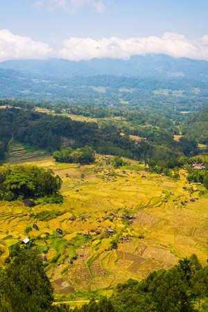expansive: Expansive landscape and bright rice fields on the mountains of Batutumonga, Tana Toraja, South Sulawesi, upgrowing travel destination in Indonesia. Wide angle view from above.
