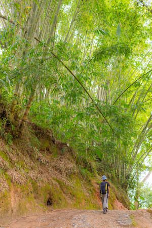 single lane road: One backpacker walking through a beautiful bamboo forest in morning sunlight on single lane country road. South Sulawesi, Indonesia.
