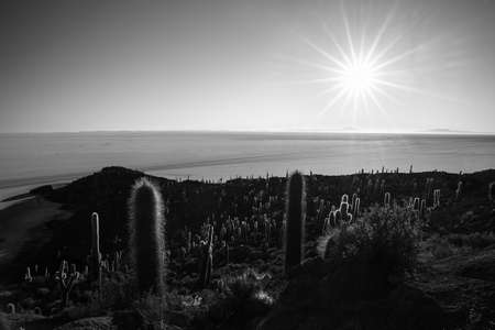 incahuasi: The sun star at the horizon over the majestic Uyuni Salt Flat, among the most important travel destination in Bolivia. Wide angle shot in backlight from the Incahuasi Island with glowing rocks and cactus. Black and white converted.