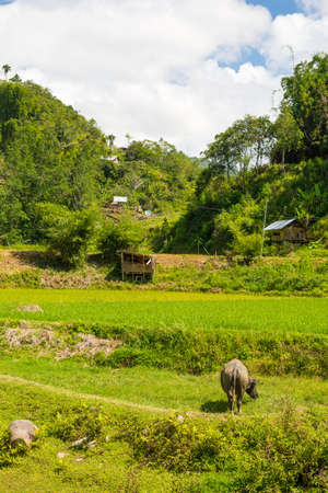 rural: Traditional village with tipical boat shaped roofs in idyllic rural location in the Mamasa valley, West Tana Toraja, South Sulawesi, Indonesia. Stock Photo