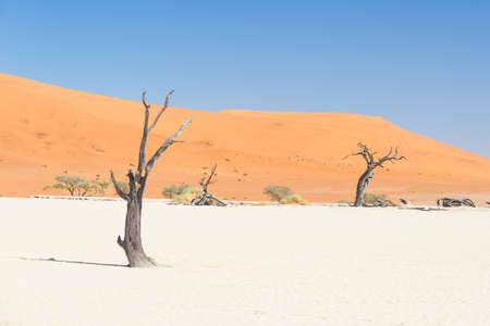 The scenic Sossusvlei and Deadvlei, clay and salt pan with braided Acacia trees surrounded by majestic sand dunes. Namib Naukluft National Park, main visitor attraction and travel destination in Namibia. Stock Photo