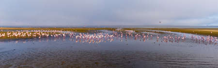 Group of pink flamingos on the sea at Walvis Bay, the atlantic coast of Namibia, Africa. Stock Photo