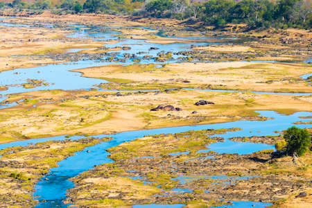 Hippos on riverbank in the Kruger National Park, famous travel destination in South Africa. Stock Photo