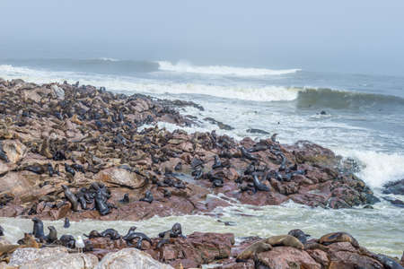 The seal colony at Cape Cross, on the atlantic coastline of Namibia, Africa. Expansive view on the beach, the rough ocean and the foggy sky.